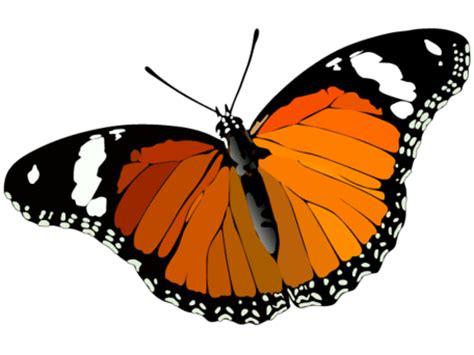 I am like a butterfly essay